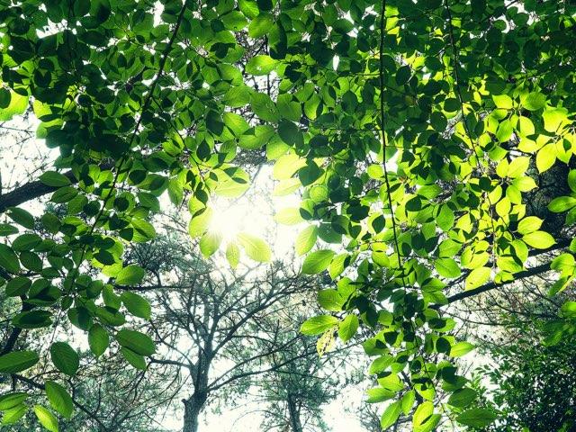 공원에 들리다 본 녹색의 잎들