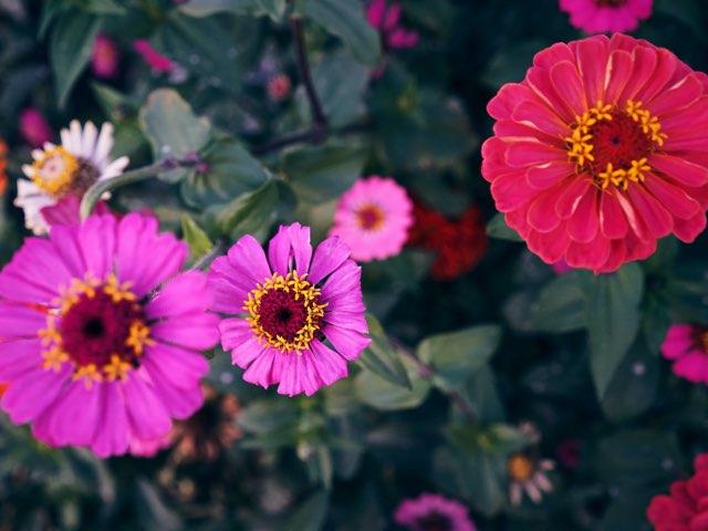 다채롭고 동그란 꽃들