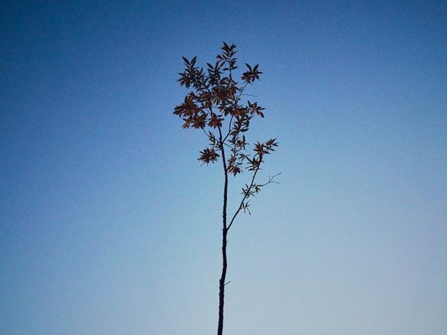 솟아오른 작은나무