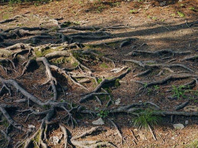 얽혀있는 뿌리