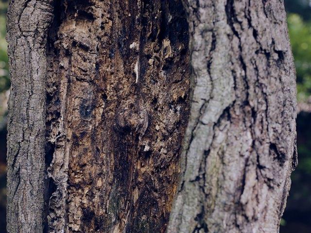 나무의 흔적