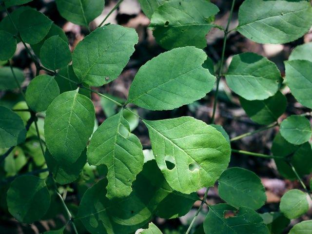 커다란 잎들