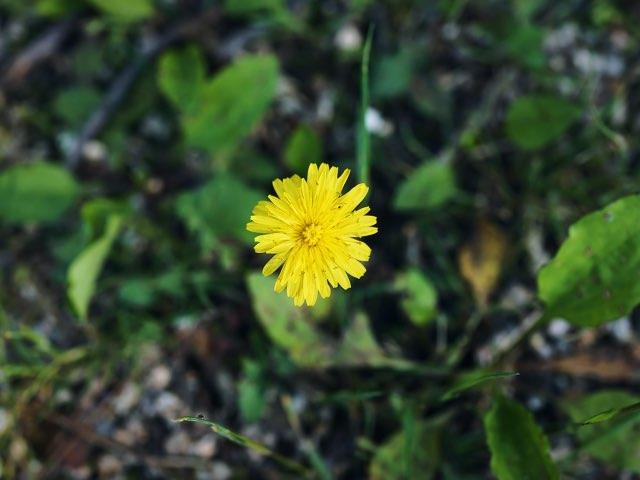 작고 노란 꽃
