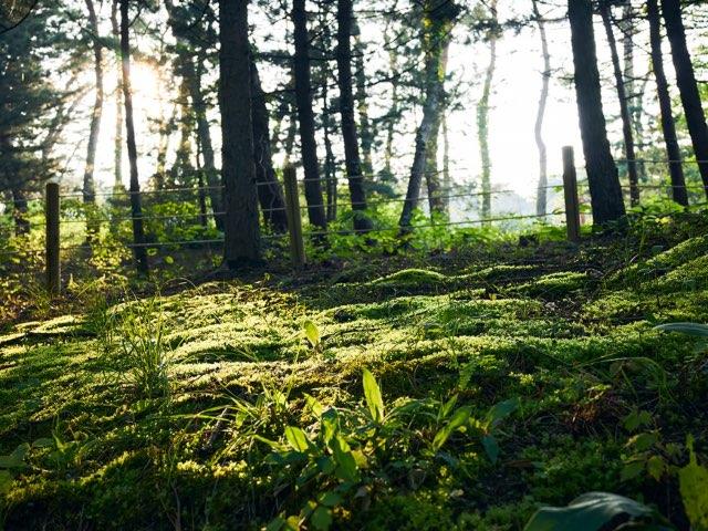 공원 속 숲의모습