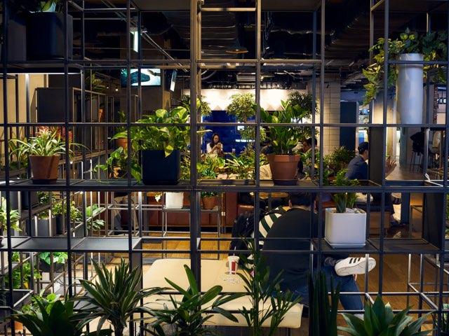 식물과 함께하는 공간