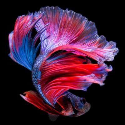 멋진 물고기 사진들