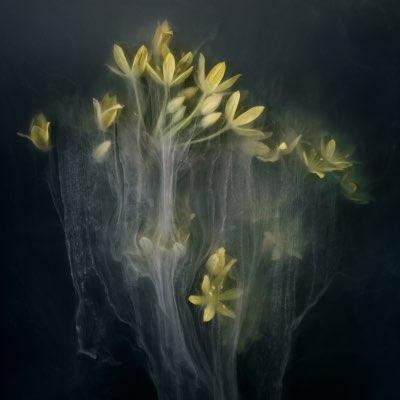 Behance - FlowerPower III
