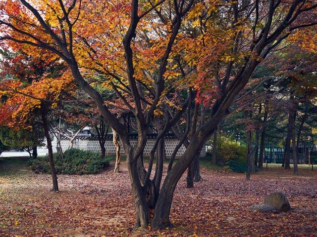 가을의 색