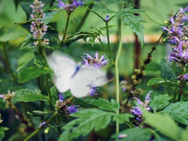 흐르는 나비