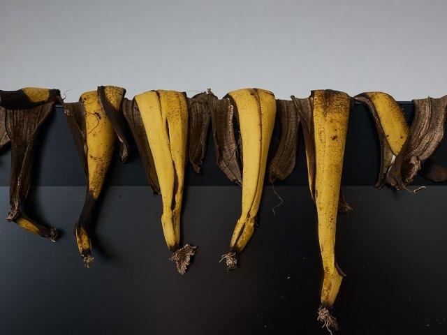 마르는 바나나들