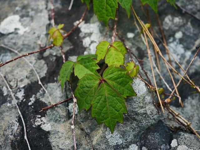 바위와 식물